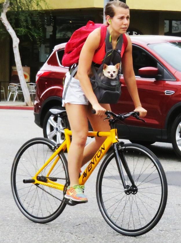 BikeDogRide