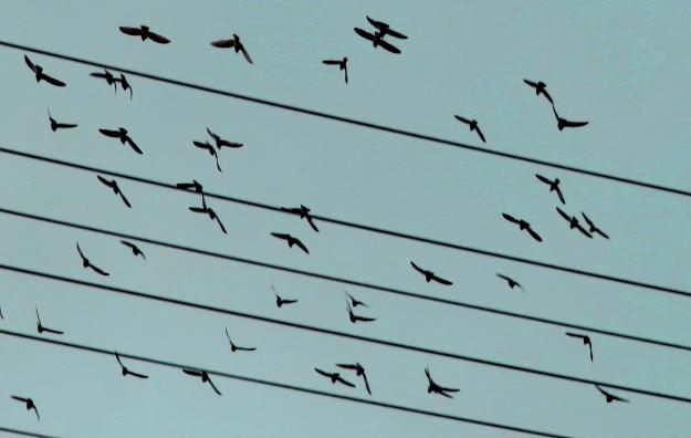 BirdsLg.jpg
